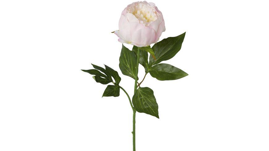 Peonie Rosa 58 cm