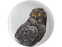 MAXWELL WILLIAMS Teller Marini Ferlazzo Owl