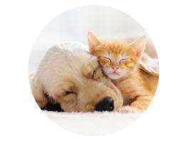 POPSOCKETS BASIC CAT DOG