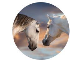 POPSOCKETS BASIC SUNSET HORSES