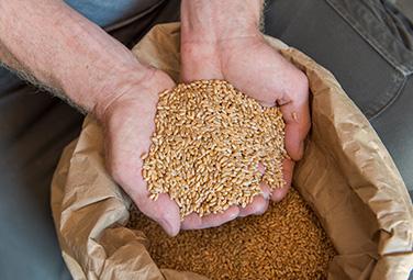 Alnatura Getreidemühle