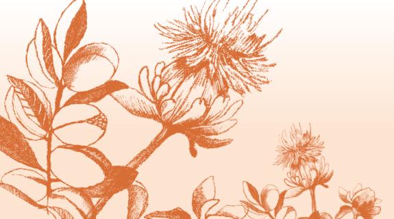 Die Saflorblüte