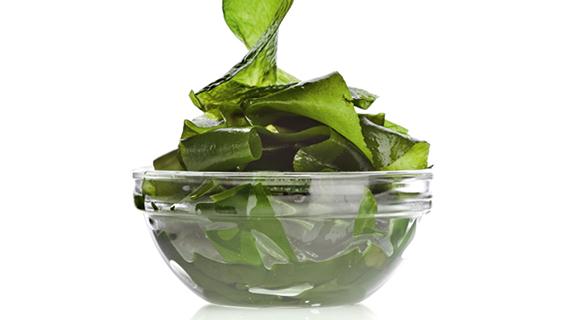 Alge im Glas
