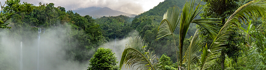 Tópusi erdők napja