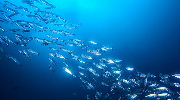 Svetovni dan oceanov