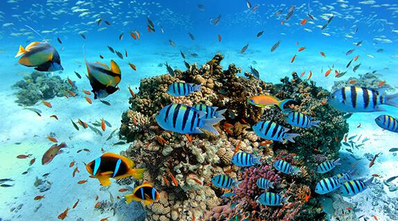Korallbarát napozószerek